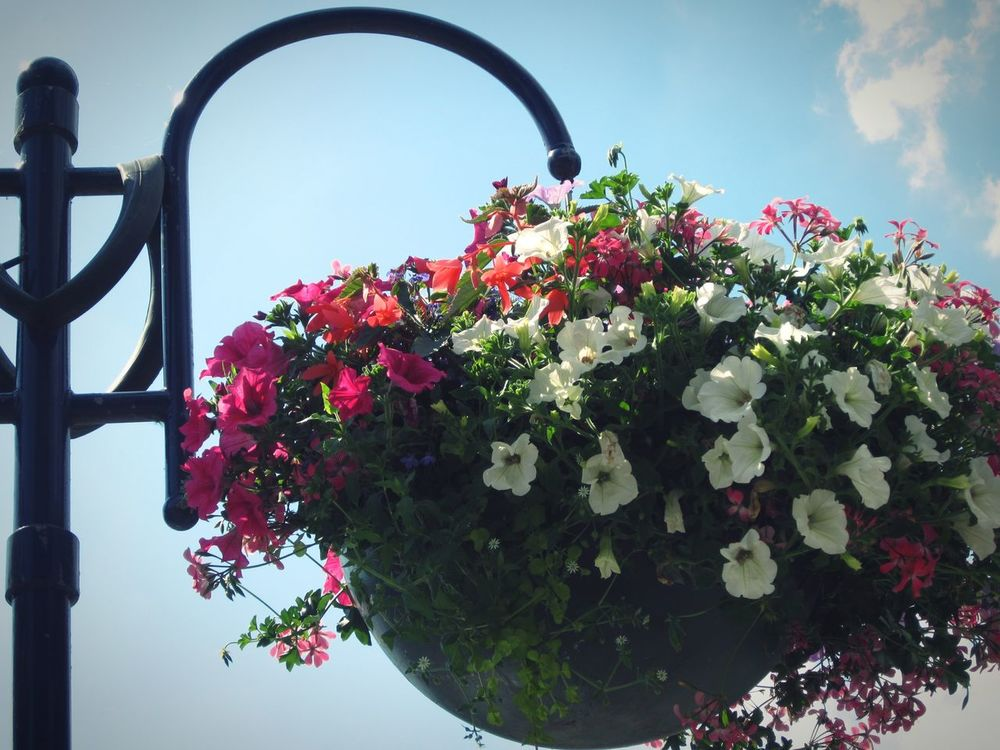 Brilliant Light on another Hot Day ☀ ☀ ☀💡 💡 💡 Hello World Sunny Day Hanging Basket Flowers Bright_and_bold Up High Giant Basket Flower Collection Sunshine Flowers, Nature And Beauty Showcase July