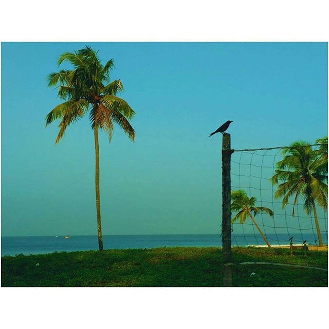 Sky Skyporn Instasky Clearbluesky Beachview Instabeach Beach Sea Mesmerizingsky Crow VSCO Igers Photooftheday Mobilephotography Nature Naturelovers Instanature Instagood Likes4likes Pastel Power