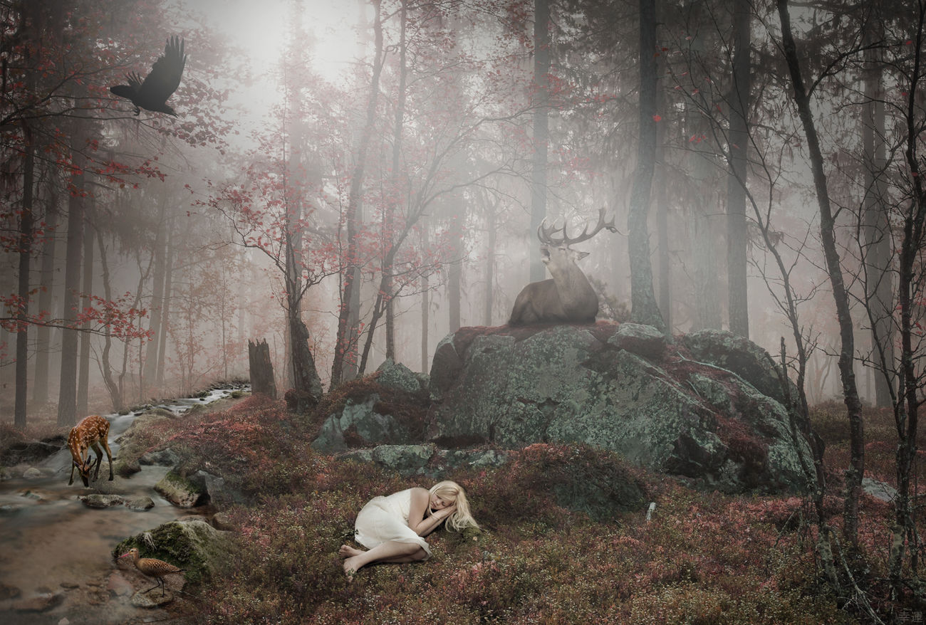 the lost girl - chapter 17 : find your happy place The Lost Girl Fantasy ArtWork Digital Art Photomanipulation Photoshop Storytelling EyeEm Gallery Eyem Best Edits Silence Happy Place Nature Animals Forest Girl Raven Photoshop Compositing Surrealism Portrait Melancholic Landscapes Sunrise Foggy Morning Shootermag Lucky's Fantasy Lucky's Memories