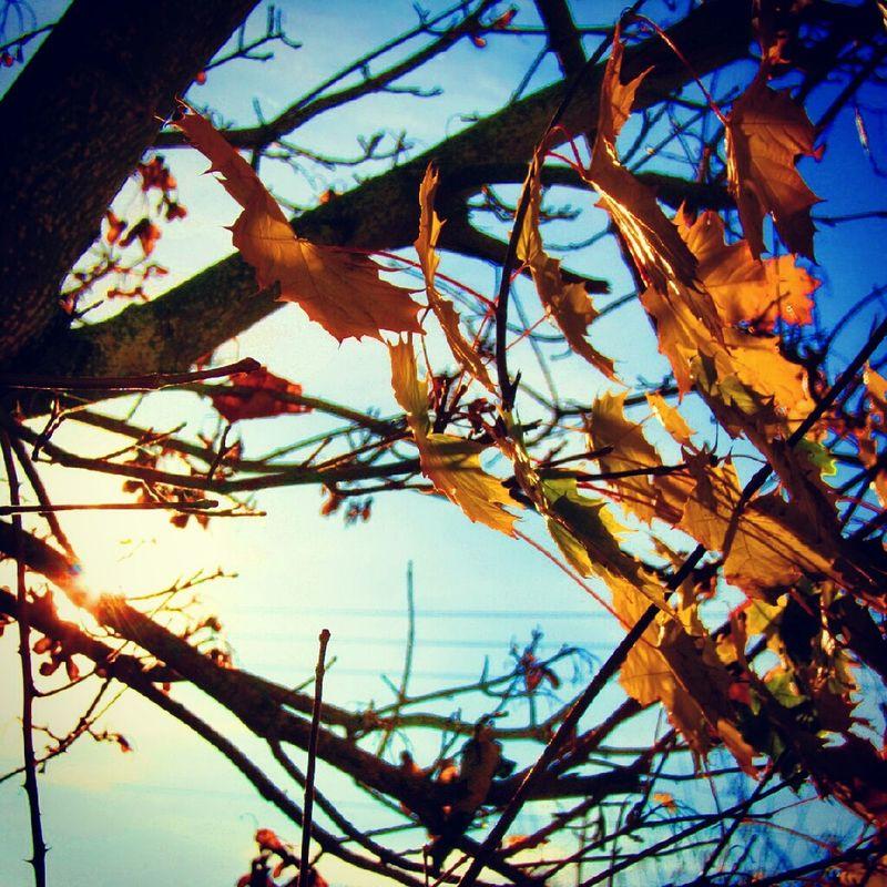 Autumn Colors Of Autumn