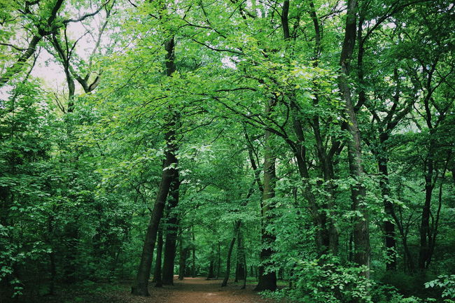 Forest Photography Nature_collection Forest Path Forest Nature Photography Nature On Your Doorstep Naturelovers Nature