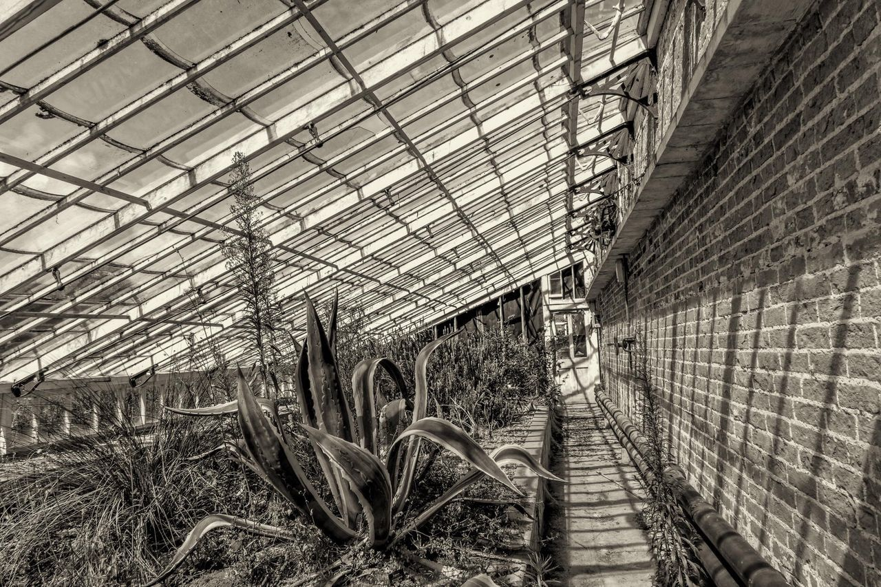 Not so Greenhouse 02. An abandoned greenhouse on the Holkham estate. Nikon Coolpix A with edit in Lightroom and silver efex pro 2. Check This Out Blackandwhite Photography Old Buildings Light And Shadow Flowers,Plants & Garden Holkham Monochrome