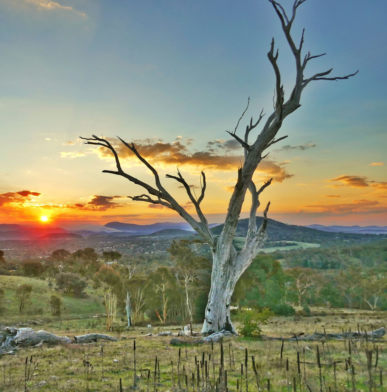 Sunset Landscape Tree Sun No People Outdoors Australian Bush This Is Where I Live Australia Colours Of Nature The Great Outdoors - 2017 EyeEm Awards