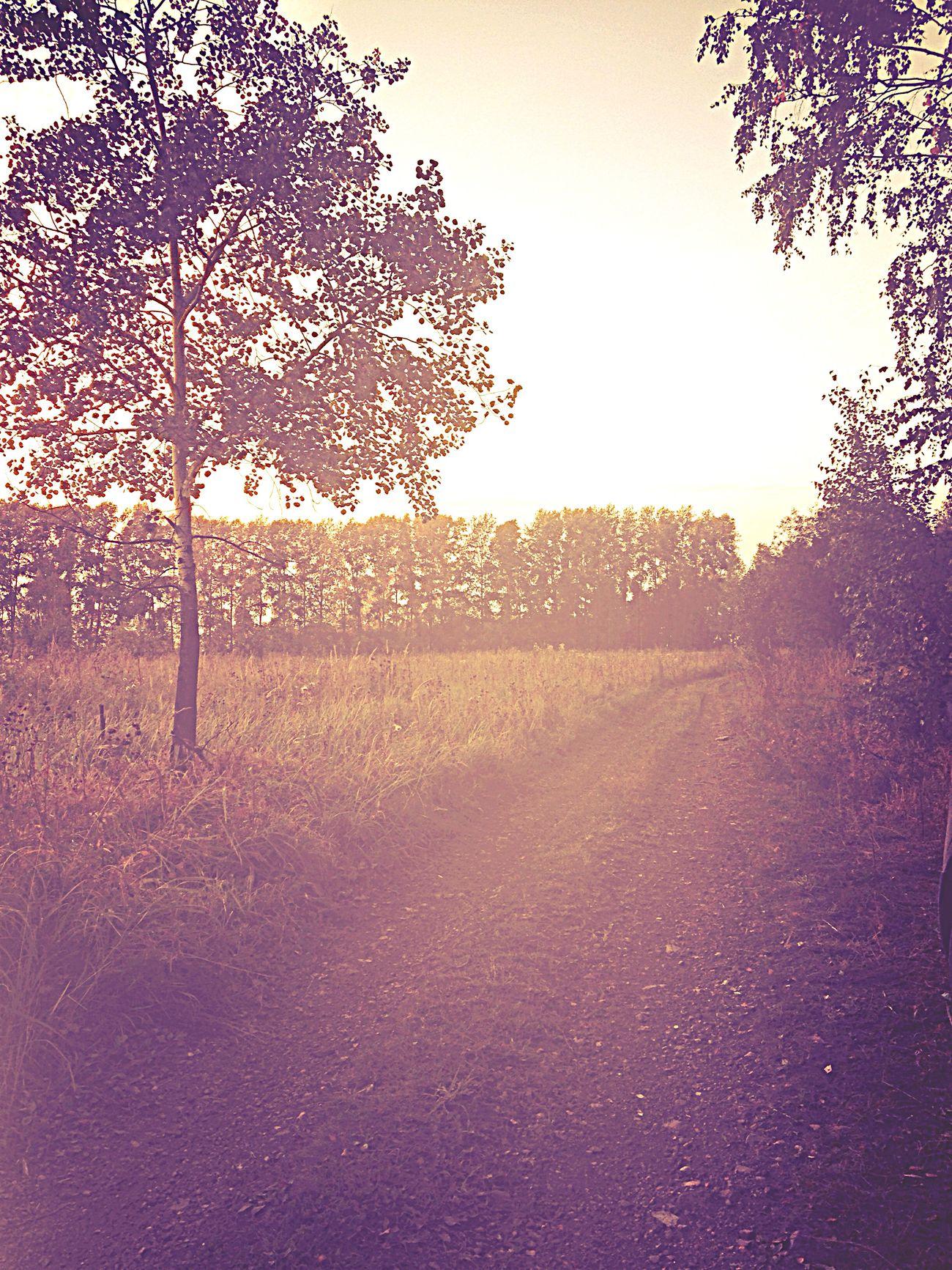 Люблю природу тишина спокойствие ☺️🌳🌳🌳