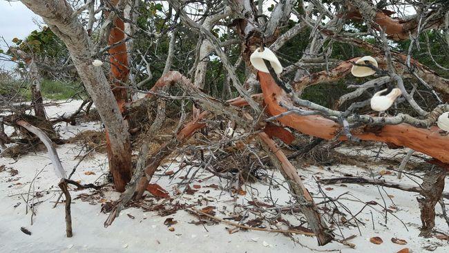 Legs. Beachphotography Beachlife Beachtime Beachlovers Artistic Art Photography Shells🐚 Shell Art Shell Photography Branches Branches No Leaves Branches Pattern