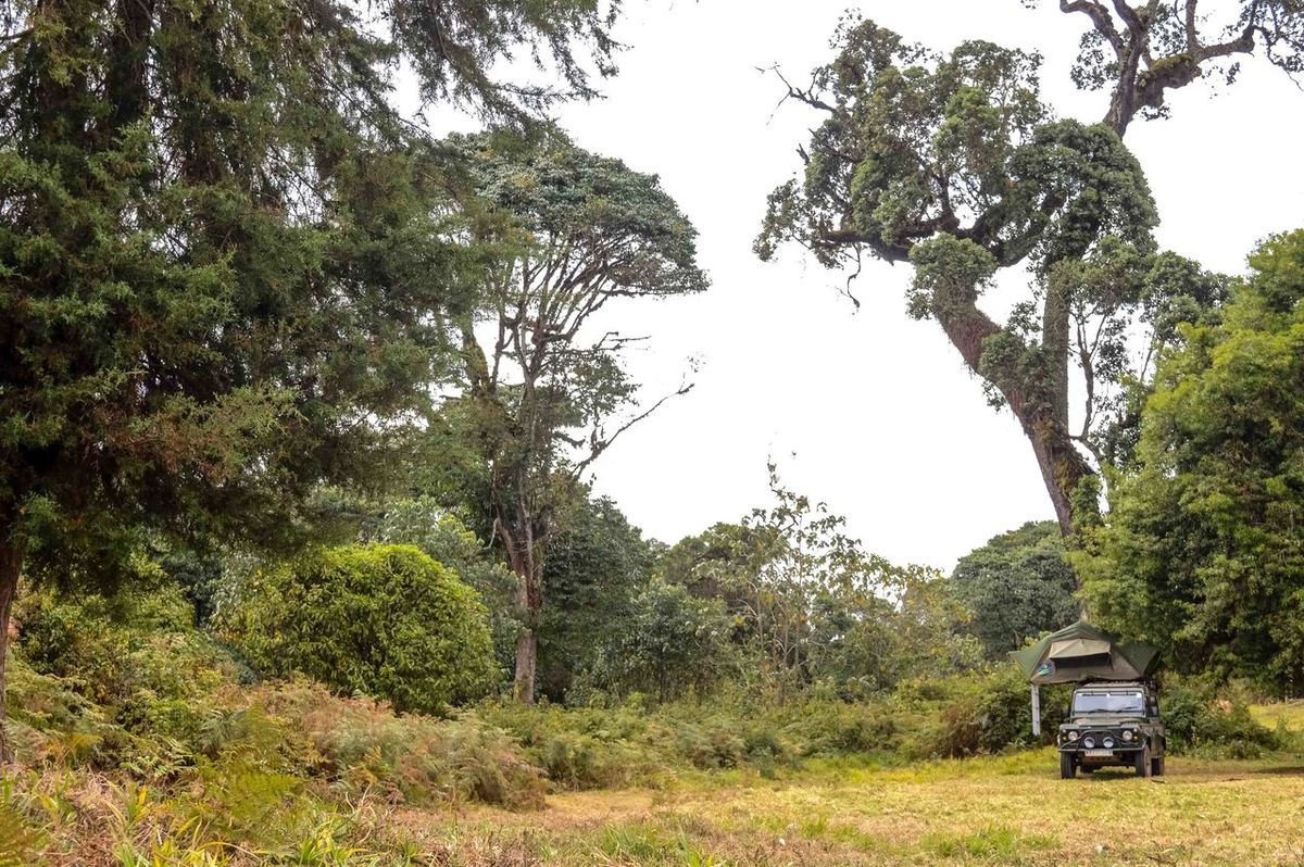 Love Of The Outdoors Camping Day Defender Landrover  Landrover Defender Nature Outdoors Outdoors❤ Rooftop Tent Transportation Tree