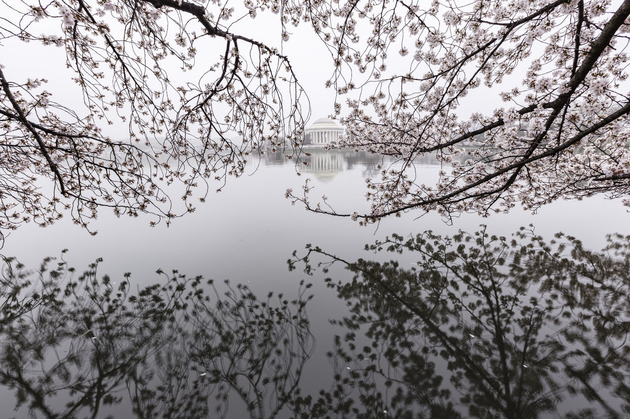 The Cherry Blossoms in Washington, DC were severely impacted by a cold snap just as many of the trees were coming into the early stages of blooming. The remaining blooms (about 50%) reached peak bloom March 25th and were greeted on the 26th by a thick blanket of fog. Normally the Washington Monument would appear at the right side of the Image. Due to the extreme fog, only its base is visible. Beauty In Nature Bird Branch Day Lake Nature No People Outdoors Reflection Sky Tranquility Tree Water