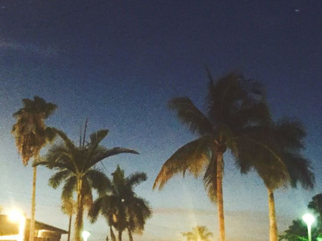 Florida Palm Trees Night Time Beautiful Blue Colours Taking Photos Own Photography