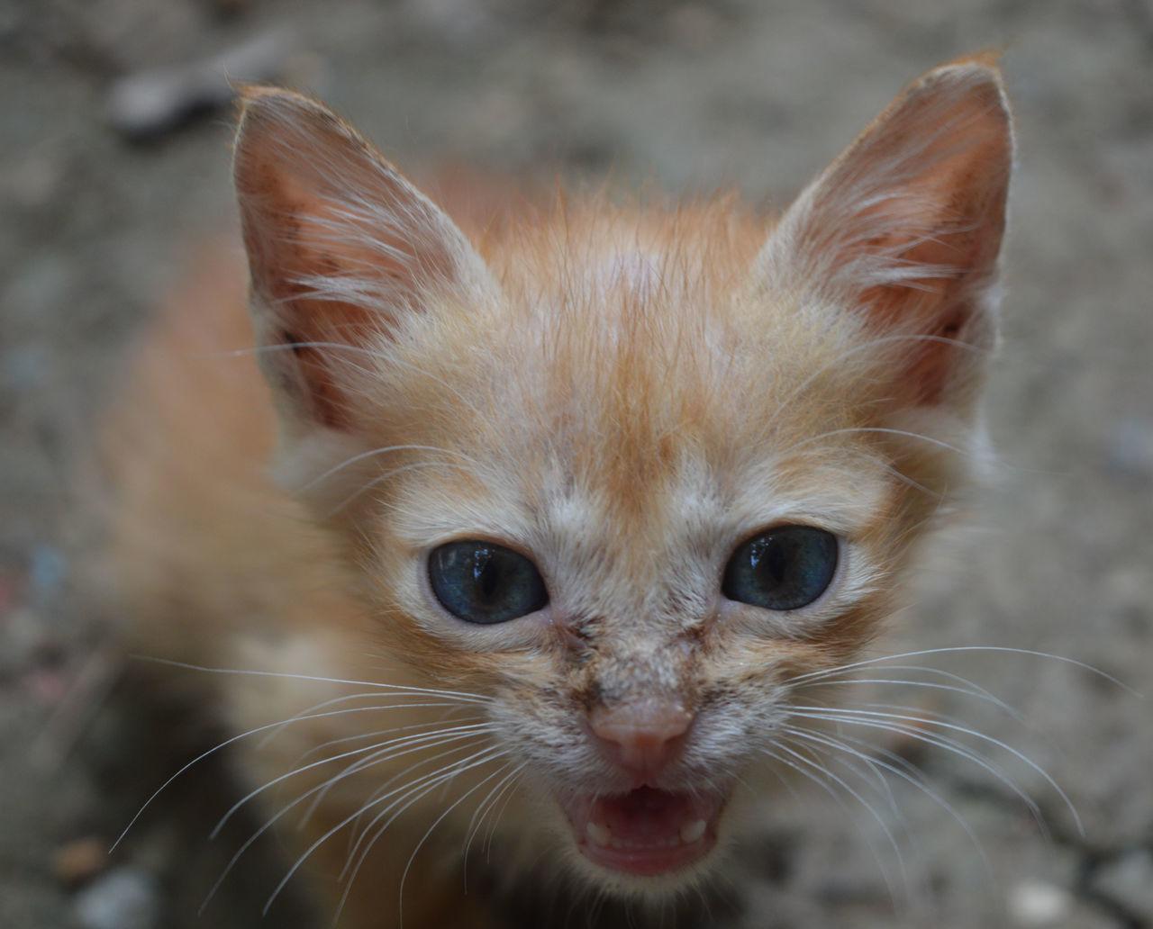 Beautiful stock photos of baby katzen,  Animal Themes,  Close-Up,  Day,  Domestic Animals