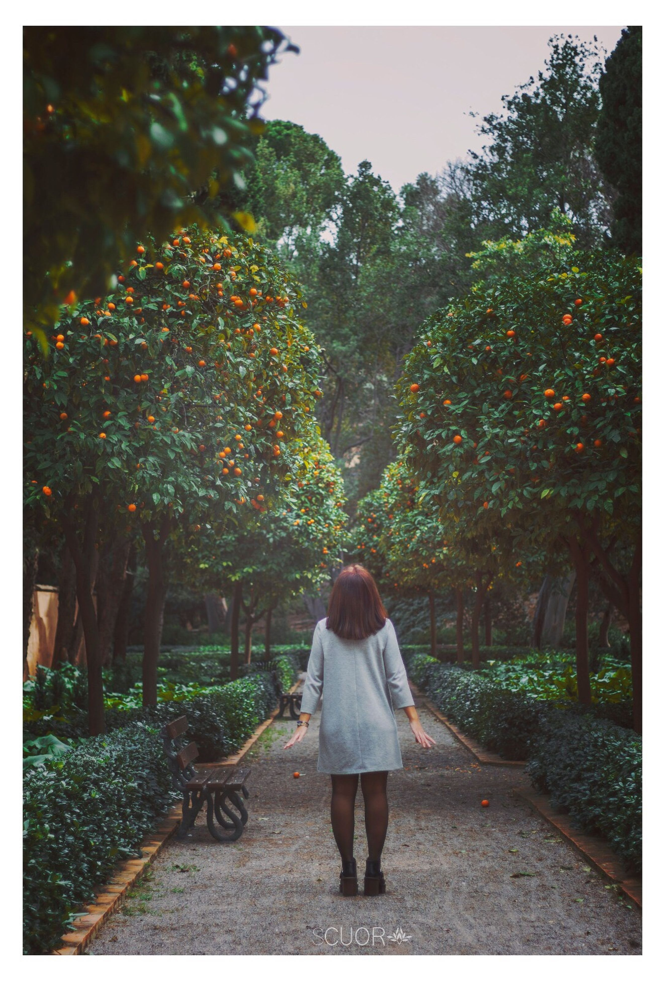 rear view, tree, full length, nature, women, one person, leisure activity, green color, outdoors, plant, only women, day, real people, people, adults only, adult