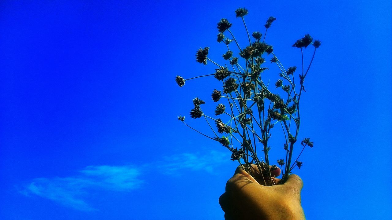 Freedom | Flowers Sky Flower And Sky Blue Summer Love Sweet Symbolic  Hand Sommergefühle