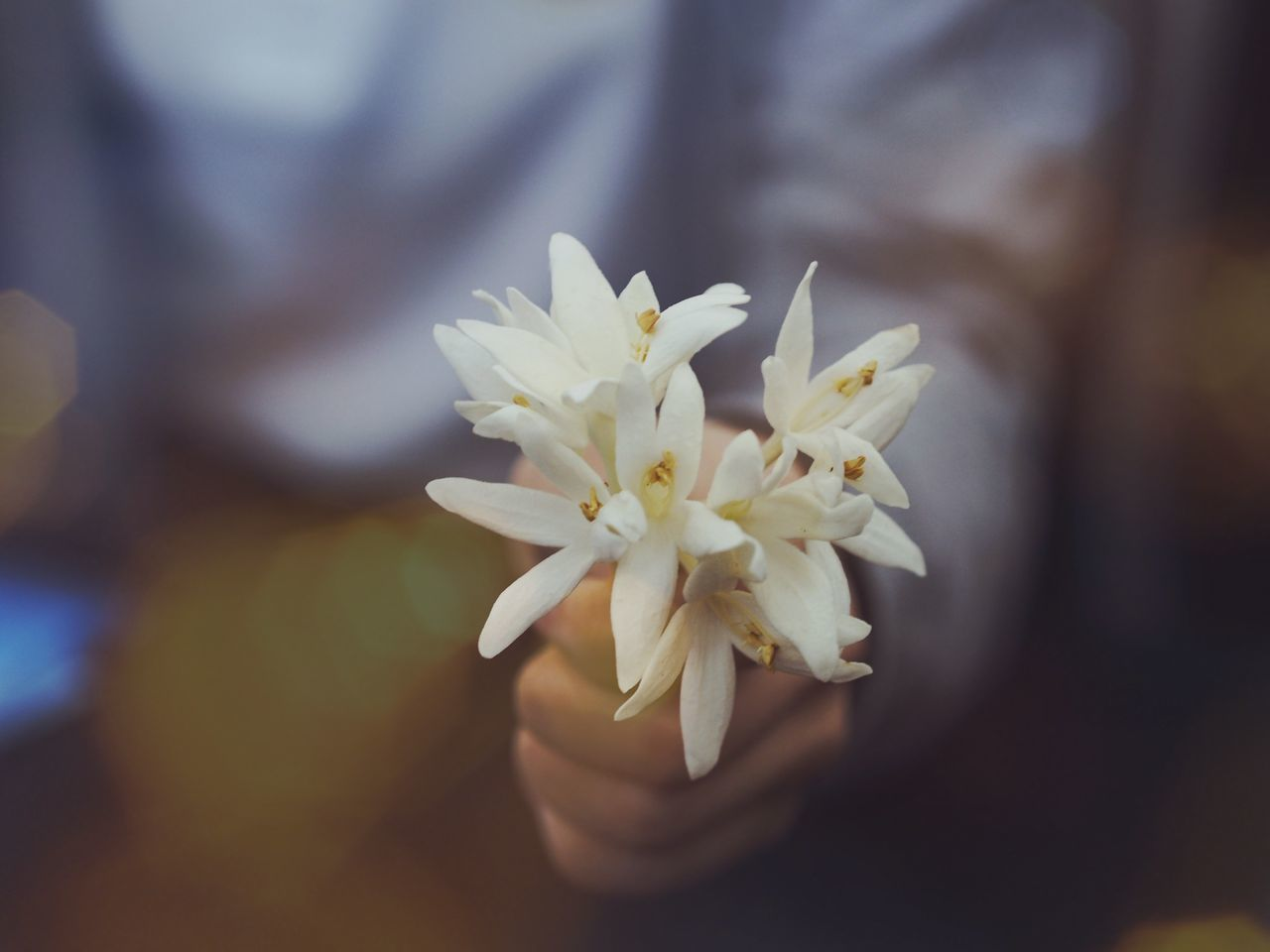 Flower Fragility Blossom Springtime Nature Beauty In Nature Selective Focus Flower Head Close-up Petal White Color Freshness Growth Stamen Day Pastel Colored Outdoors Plant No People Closing