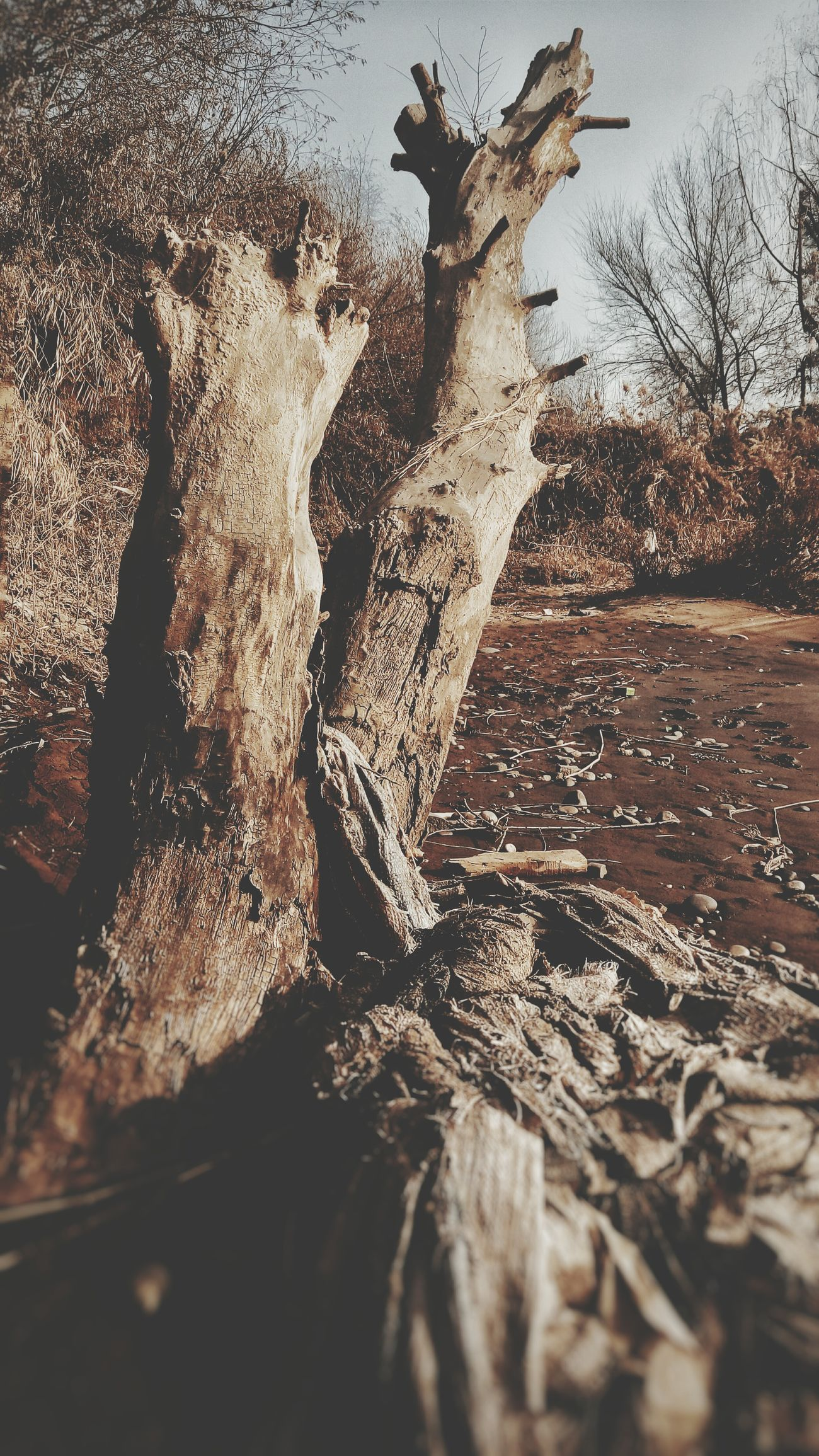 Riverside Dead Tree Hirst White Trash Garbage Outdoors Original Experiences Smartphone Photography Walking Around And Taking Pictures Sunny Day 🌞 Wintertime
