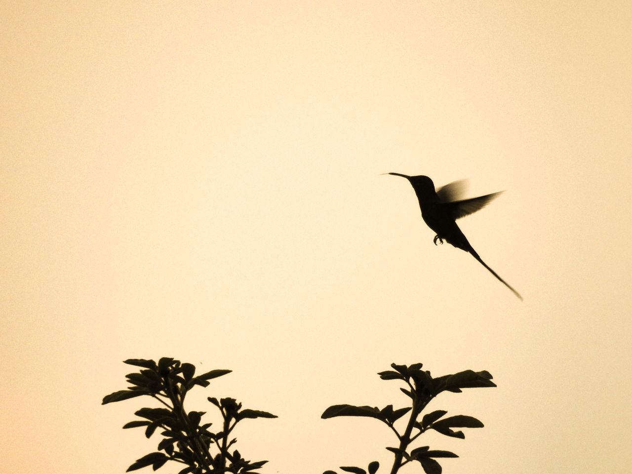 Beautiful stock photos of kolibri, Animal, Animal Themes, Avian, Beauty In Nature