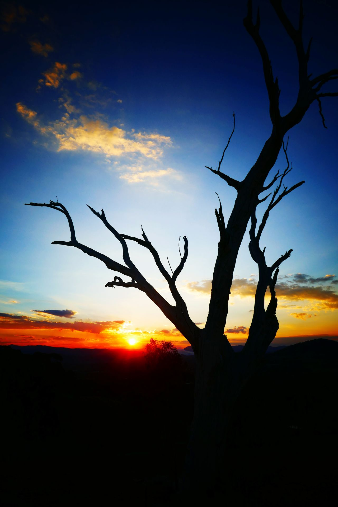 Sunset Tree Sky Nature Silhouette Branch Outdoors No People Welcome To Black EyeEmNewHere Cloud - Sky Low Angle View Australian Landscape Silhouette Origional Photo Backgrounds Colours In The Sky Colours Of Nature Tree Australia Full Frame This Is Where I Live Australian Bush Art Is Everywhere The Great Outdoors - 2017 EyeEm Awards