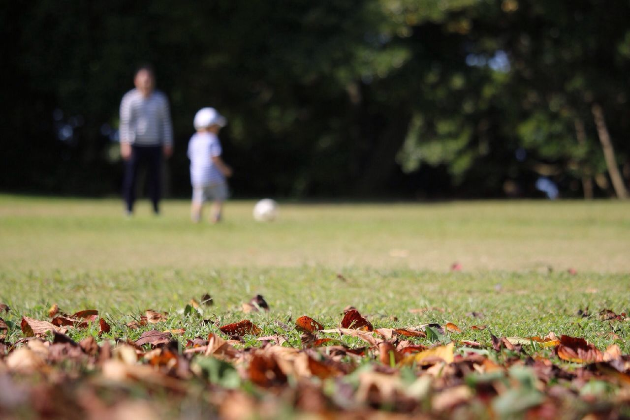 Beautiful stock photos of park, Boys, Child, Day, Fallen Leaf