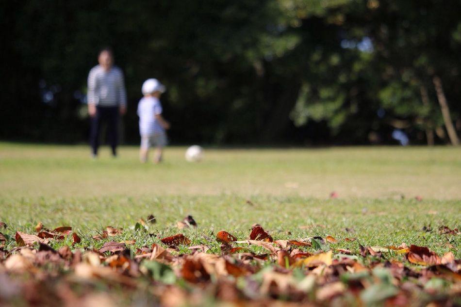 Beautiful stock photos of football, Boys, Child, Day, Fallen Leaf
