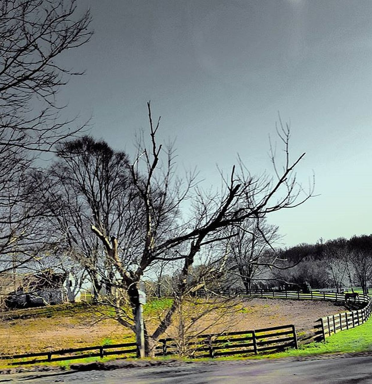 bare tree, tree, tranquility, no people, branch, nature, day, landscape, outdoors, sky, beauty in nature, scenics, grass