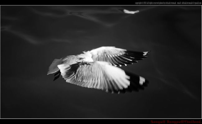 Seagull, Thailand. Thailand_allshots Blackandwhite Seagulls Traveling