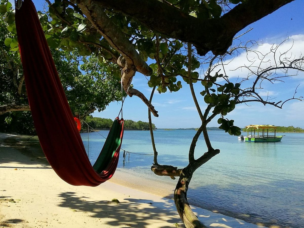 My Favorite Place Tree Water Sea Beach Tree Trunk Tranquil Scene Growth Tourism Vacations Tranquility Sky Nature Day Beauty In Nature Travel Destinations Hanging Out Taking Photos Travel Photography Traveling Beach Photography Beachaddict Tree Water Sea
