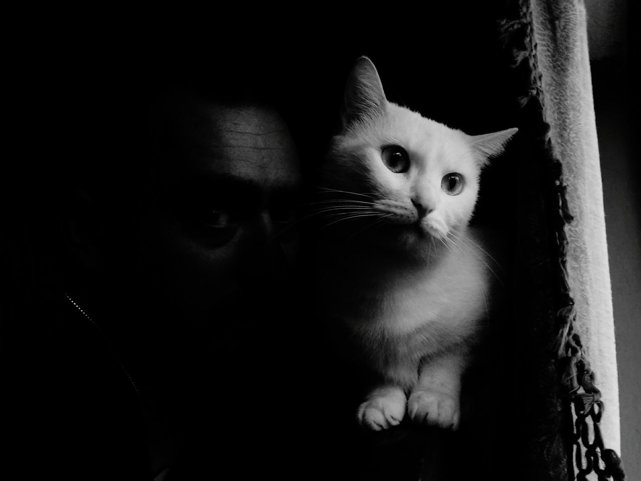 Me and my love! Domestic Cat Pets Looking At Camera Watching Close-up Me Cat Bestfriend❤ Love❤ Dark Black&white Blackandwhitephotography Photography Look Shadows Watchout Animal Pet Pet Photography  Black Background OneLove Domestic Animals Animal Themes Portrait