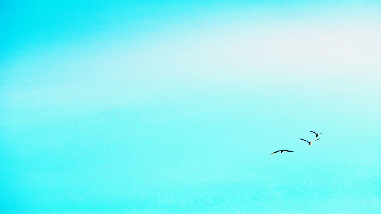 Flying Bird Clear Sky Animals In The Wild Nature Sky Hello Word ✌ Tadda Community Eye4photography  EyeEm Gallery Getting Inspired Landscape_photography Messico