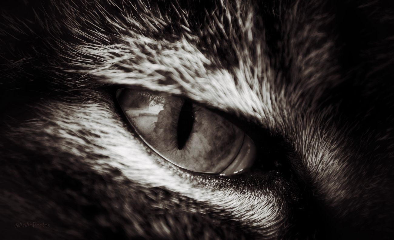 🐱 Cats 🐱 Cateyes Cats Of EyeEm Cat Eyes Cat Lovers Close-up Sepia Sepiastyle Focus On Foreground Animal Themes Editing Photos Sepia Photography Domestic Cat Pets Animal Eye Feline Cat