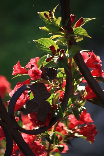 Beauty In Nature Blossom Branch Close-up Flower Growth Imitation And Reality Leaf Nature Plant Springtime