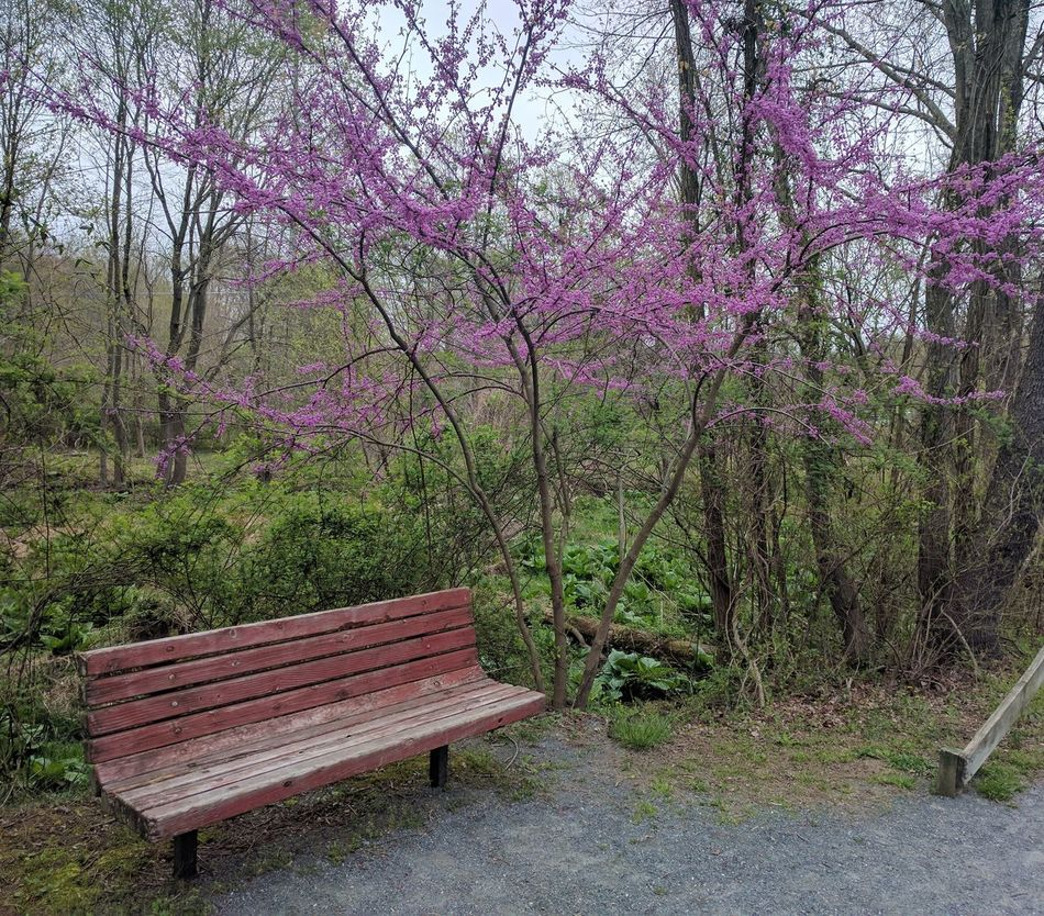 Growth Tree No People Day Nature Park - Man Made Space Outdoors Grass Beauty In Nature Purple Color Bench