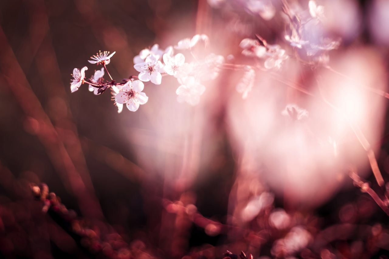 Autumn Be My Valentine Beauty In Nature Bokeh Branch Cherry Blossom Close-up Cultures Date Day Defocused Flower Fragility Freshness Leaf Love Lover Nature No People Outdoors Pink Tree
