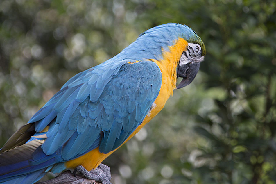 Beautiful stock photos of parrot, Animal Themes, Animals In The Wild, Beak, Bird