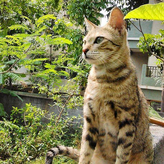 Cat Catlover Cat Igcat Catstagram Catoftheday Catlovers Catgram Igcats Catsofinstagram