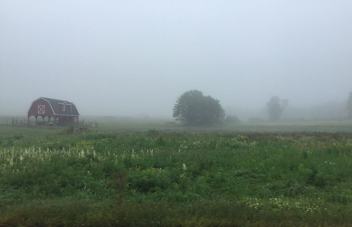 Morning Farm IPhoneography IPhone 6+ Iphone 6 Plus Field Grass Tranquil Scene Landscape Tranquility Fog Rural Scene Growth Scenics Nature Beauty In Nature Foggy Farm Plant Agriculture Day Non-urban Scene Outdoors Sky Grassy