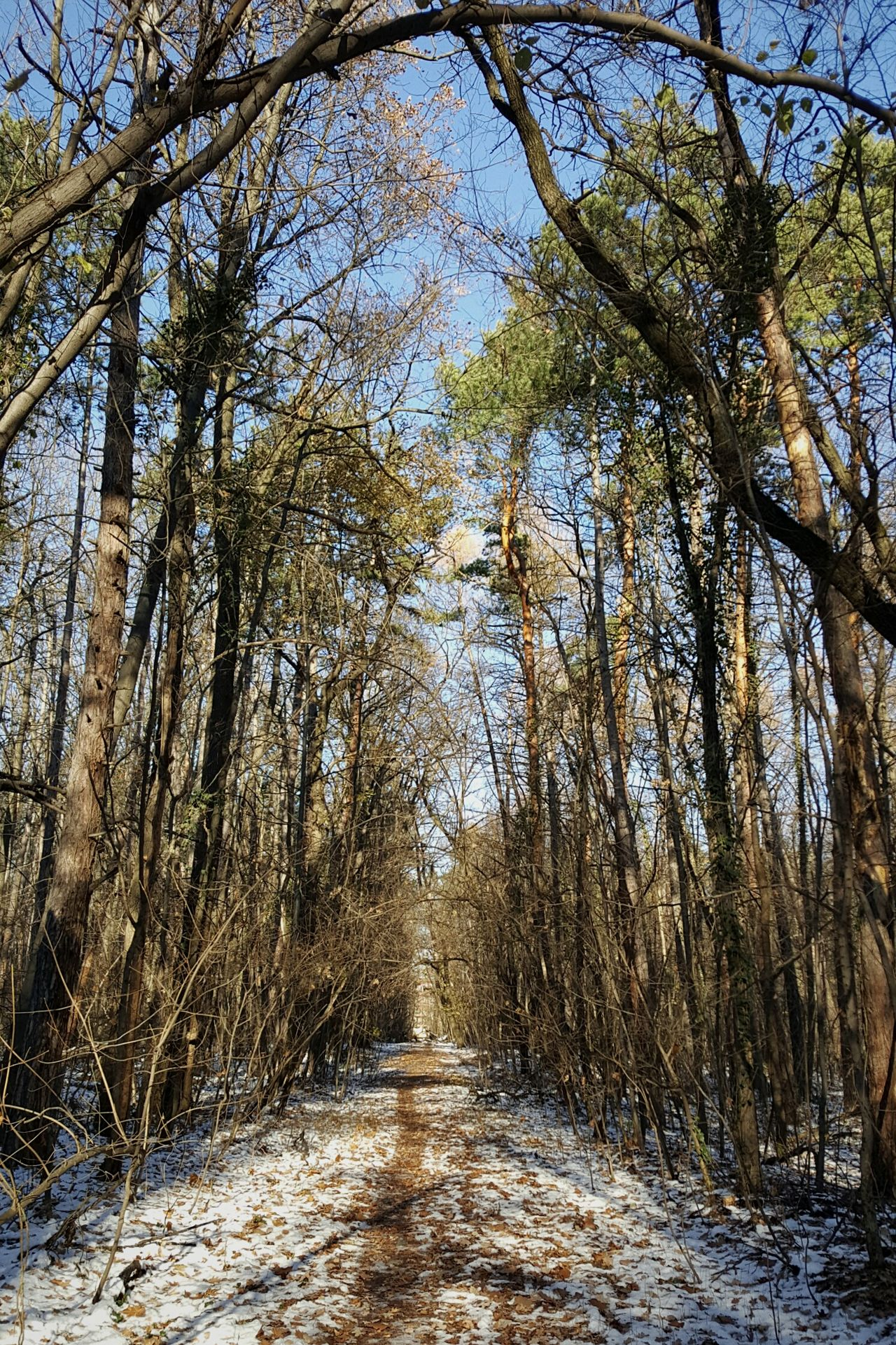 The road ahead Nature Tranquility Outdoors Beauty In Nature Cold Temperature Snow Scenics Early Winter Walk In The Park Walk In The Woods First Eyeem Photo Clear Air Cold Weather Forest Woods In The Park Pathway Pathway In The Forest Path In Nature Trees And Nature