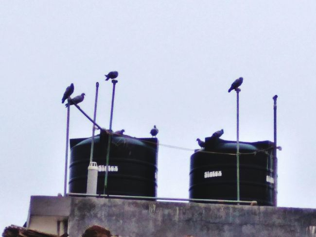 Watchers Watchers Of The City