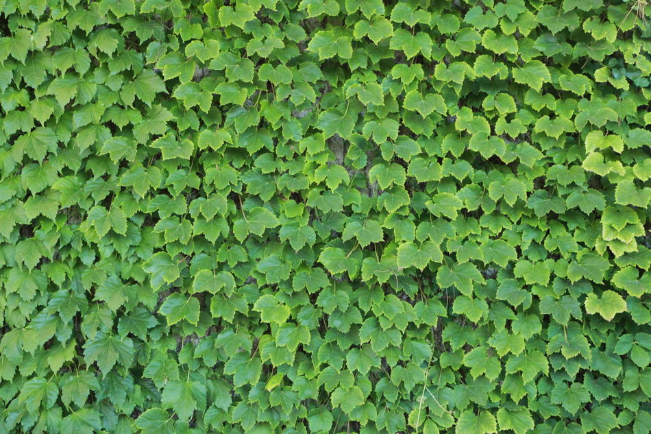 Backgrounds Green Green Color Green Wall Green Wallpaper Leaf Plant Water