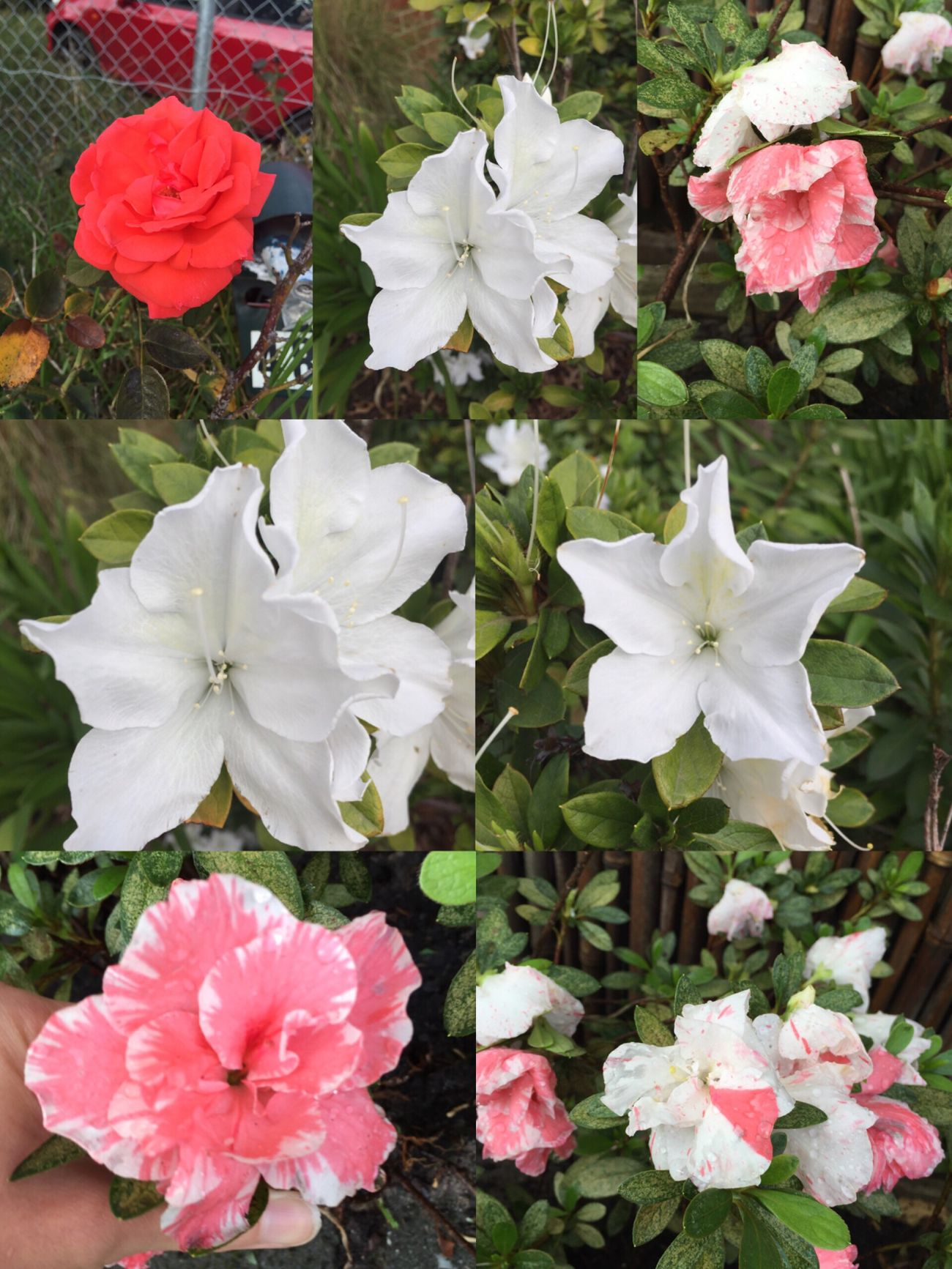 Flower collage 🌺🌸🌿🍃🌹🌸🌻 Flowers Nature Pretty Outside