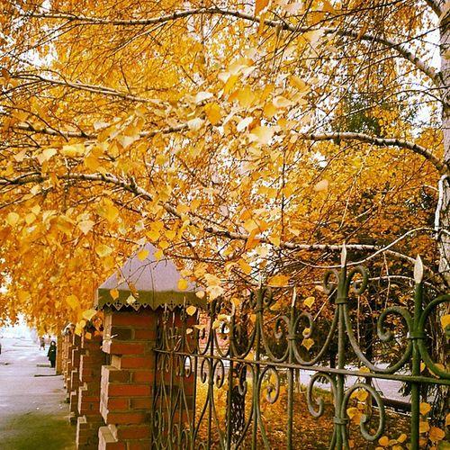омск выставкаомск осень Autumn Lastgoldofburch