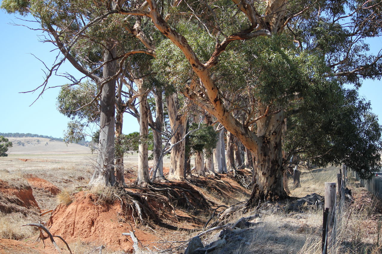 Beauty In Nature Outdoors Sunlight Fallen Tree Tree South Australia, Adelaide My Country Roadside