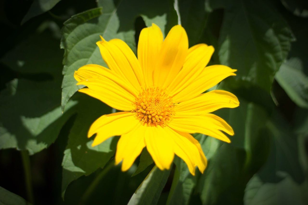 flower, yellow, petal, growth, fragility, nature, plant, beauty in nature, flower head, freshness, blooming, day, outdoors, no people, close-up