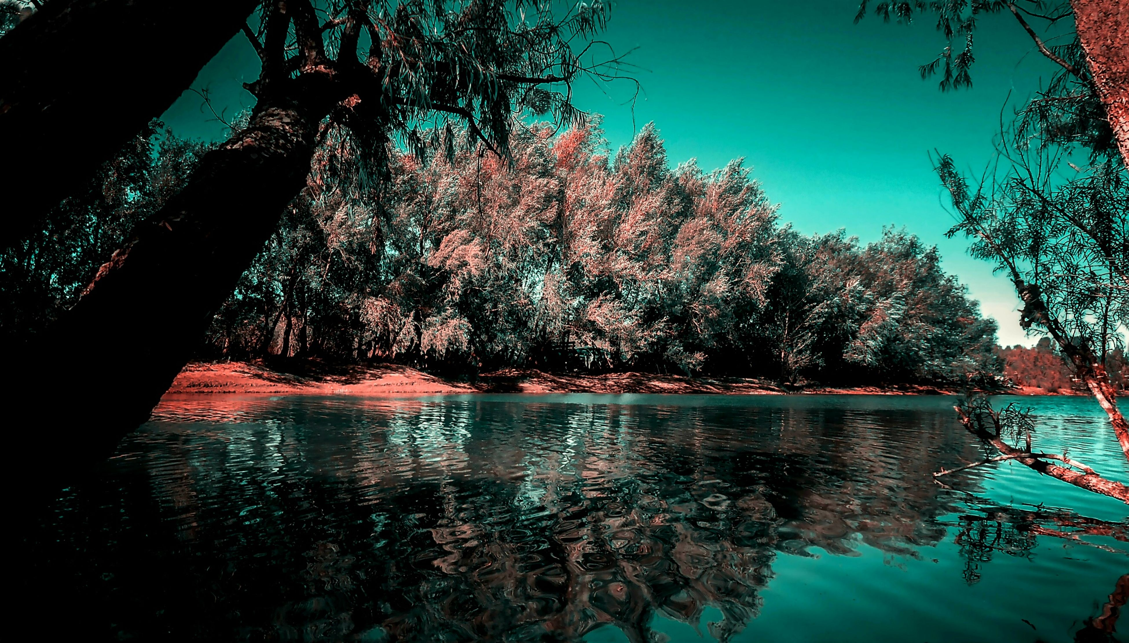 water, tree, waterfront, nature, tranquility, beauty in nature, tranquil scene, lake, scenics, no people, outdoors, day, sky