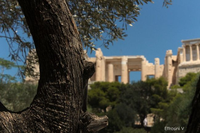 Olive tree vs Parhenon! Architecture Blue Building Day Masterpiece Nature No People Olive Tree Outdoors Parthenon Acropolis Greece Selective Focus Sky