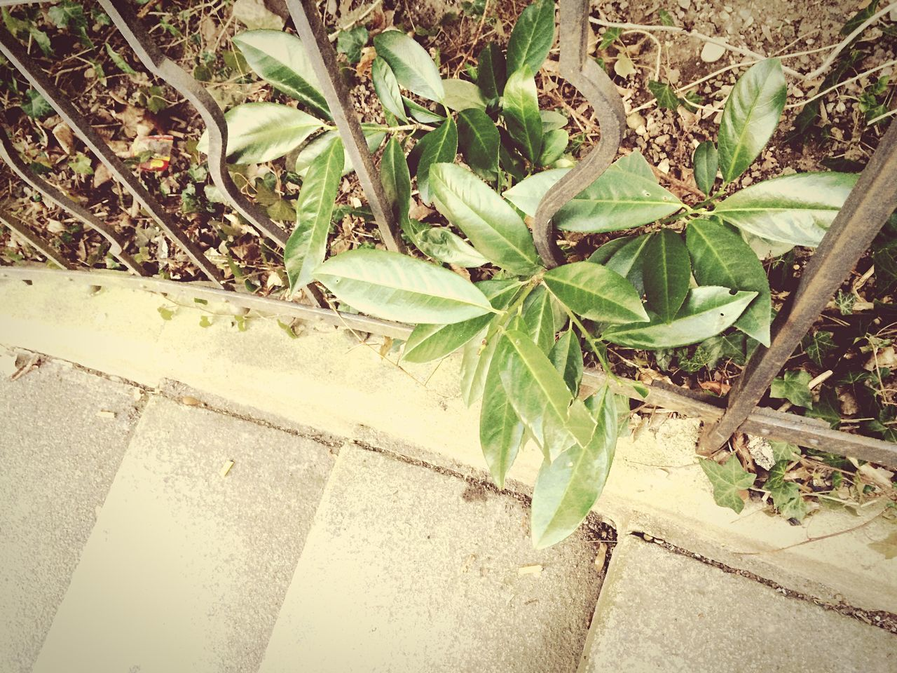 growth, leaf, plant, green color, high angle view, no people, day, outdoors, nature, close-up, freshness