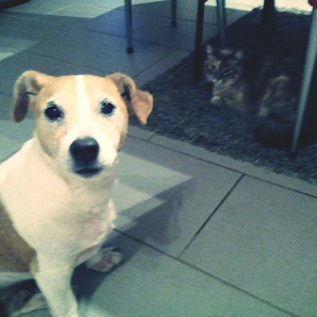 Comme chien et chat. My Dog My Cat Friends My Dogs Are Cooler Than Your Kids