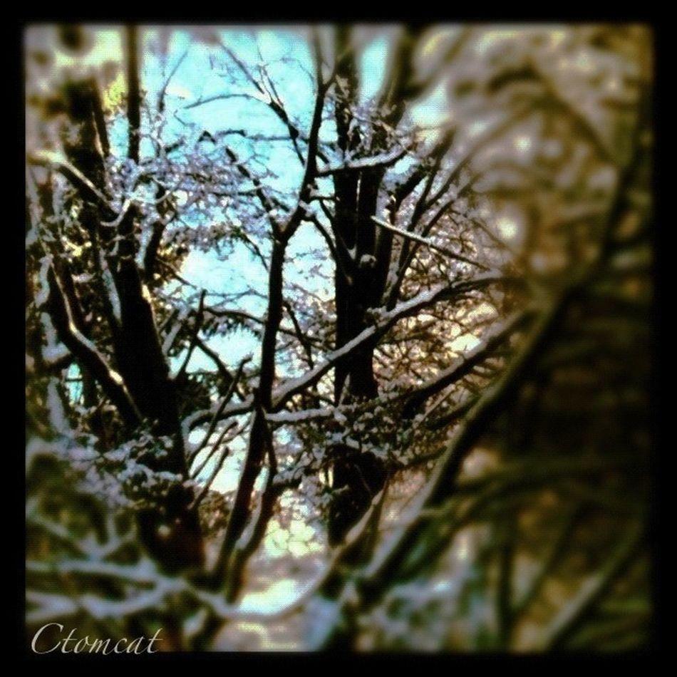 TreePorn Landscape_Collection EyeEm Nature Lover