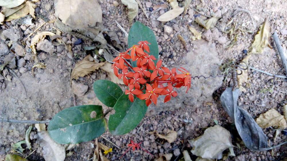 Not edited Red Flowers Nature Plants Green Dried The Purist (no Edit, No Filter) Enchanting India