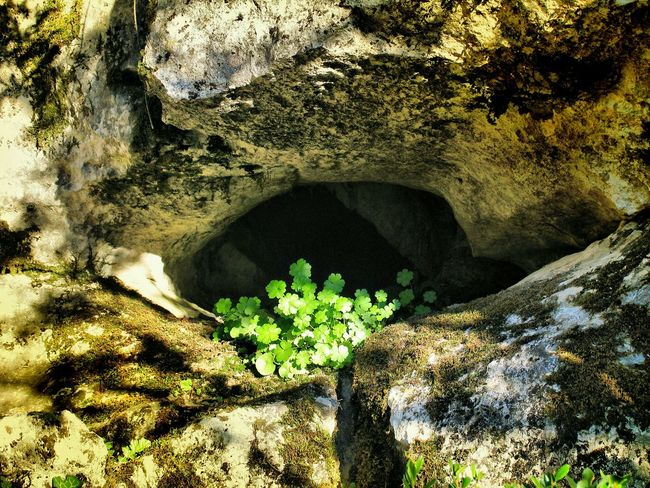 Eye shaped cleft with small, shade-loving plant. El Torcal Parque Nacional de Antequera, Malaga, Spain. Limestone Rocks Karstic Rock Formation Moss Lichen Light & Dark Green Wild Flowers Nature Photography