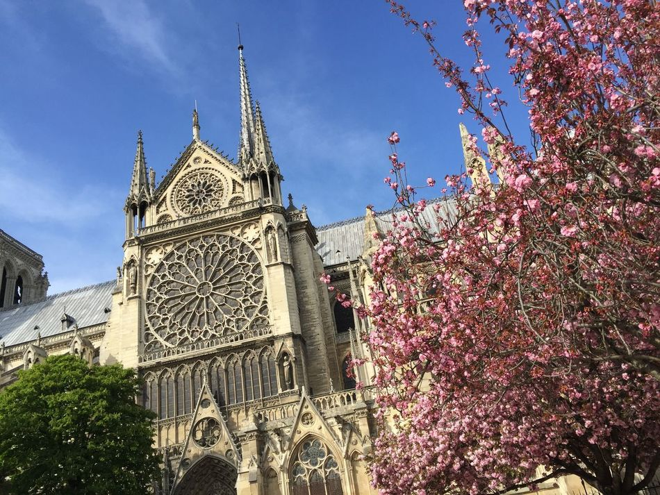 Beautiful stock photos of notre dame,  Building Exterior,  Built Structure,  Cathedral,  Day