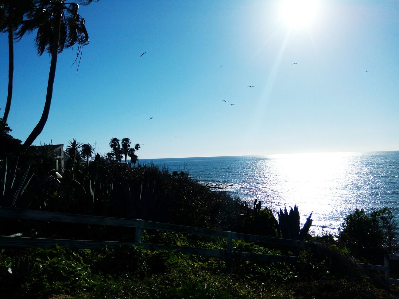 Tree Sunlight Water Sky Nature Growth Scenics Clear Sky No People Beauty In Nature Outdoors Sea Tranquil Scene Sunbeam Day Pixelgirl TRENDING  Ocean, Water, Beach, Birdrock Getty Images TRENDING  Cactus Palm Tree