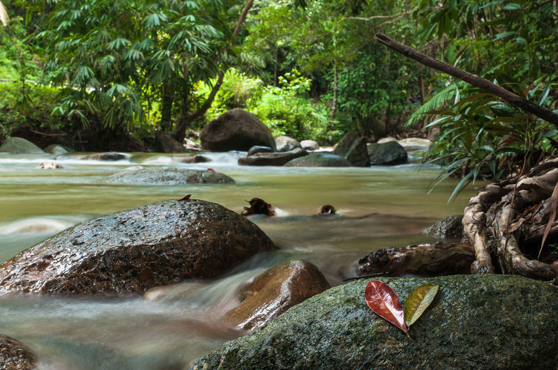 River Water Tree Day Beauty In Nature Waterfall Forest Nature River Outdoors No People Scenics Travel Ulu Chepor Ipoh